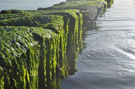 La végétation, l'eau qui se réchauffe, et surtout la lumière. Photosynthèse, plancton... vie.